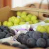 沖縄県でぶどう狩りを楽しもう‼ぶどうの収穫体験ができる観光果樹園2選