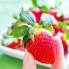 岩手県でいちご狩り‼いちごの収穫体験や食べ放題が楽しめる観光農園8選