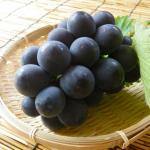 佐賀県でぶどう狩りを楽しもう‼ぶどうの収穫体験ができる観光果樹園3選