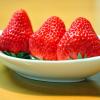 高知県でいちご狩りを楽しもう‼いちごの食べ放題ができる観光農園2選