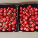 青森県でさくらんぼ狩り‼さくらんぼの食べ放題が楽しめる観光果樹園11選