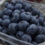 岐阜県でブルーベリー狩り‼ブルーベリーの食べ放題や収穫体験が楽しめる果樹園12選