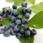 和歌山県ブルーベリー狩り‼ブルーベリーの食べ放題や収穫体験が楽しめる果樹園9選