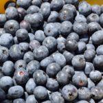 奈良県ブルーベリー狩り‼ブルーベリーの食べ放題や収穫体験が楽しめる果樹園9選