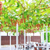 茨城県でぶどう狩り‼水戸納豆で有名な茨城県でぶどう狩りができる観光農園9選