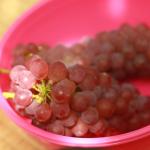 島根県でぶどう狩り‼ぶどう食べ放題や収穫体験ができる観光果樹園8選