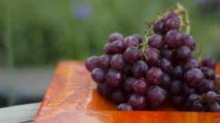 山口県でぶどう狩りを楽しもう‼ぶどうの収穫体験ができる観光果樹園4選