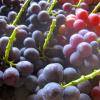 広島県でぶどう狩りを楽しもう‼ぶどう食べ放題の観光果樹園4選