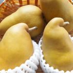 山形県で梨狩り‼梨の食べ放題や収穫体験が楽しめる観光果樹園6選