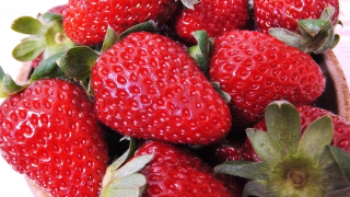 東京都でいちご狩り‼いちごの食べ放題や収穫体験が楽しめる観光農園7選
