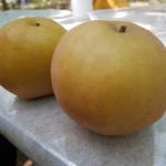 栃木県で梨狩り!梨の食べ放題や収穫体験が楽しめる観光果樹園6選