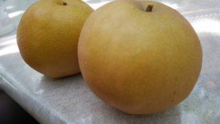 広島県で梨狩り‼梨の食べ放題や収穫体験ができる観光農園5選