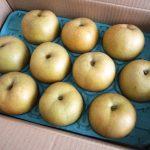 和歌山県で梨狩り‼梨の食べ放題や収穫体験ができる観光農園3選