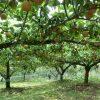 宮崎県で梨狩り‼梨の収穫体験や食べ放題が楽しめる観光農園11選