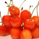 茨城県でさくらんぼ狩り‼さくらんぼの食べ放題が楽しめる観光果樹園2選