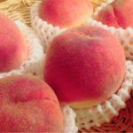 滋賀県で桃狩り‼桃の食べ放題が楽しめる観光果樹園1選