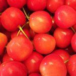 福井県でさくらんぼ狩り‼さくらんぼの食べ放題が楽しめる果樹園1選