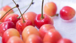 熊本県でさくらんぼ狩り‼さくらんぼの収穫体験が楽しめる果樹園1選