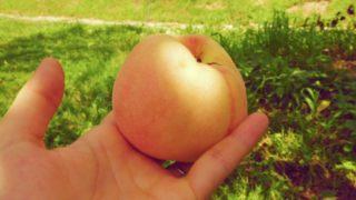 京都府で桃狩り‼桃の収穫体験が楽しめる果樹園1選
