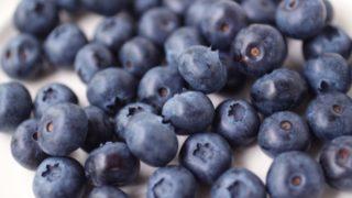 大阪府でブルーベリー狩り‼ブルーベリーの食べ放題が楽しめる果樹園2選