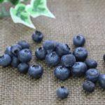 埼玉県でブルーベリー狩り‼ブルーベリーの食べ放題や収穫体験が楽しめる果樹園23選