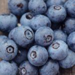 千葉県でブルーベリー狩り‼ブルーベリーの食べ放題や収穫体験が楽しめる果樹園51選