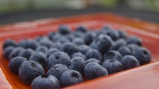 京都府ブルーベリー狩り‼ブルーベリーの食べ放題や収穫体験が楽しめる果樹園6選