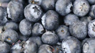 愛知県でブルーベリー狩り‼ブルーベリーの食べ放題や収穫体験が楽しめる果樹園24選