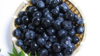 鳥取県ブルーベリー狩り‼ブルーベリーの食べ放題や収穫体験が楽しめる果樹園12選