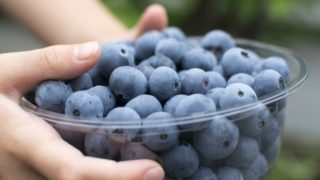 福岡県ブルーベリー狩り‼ブルーベリーの食べ放題や収穫体験が楽しめる果樹園14選