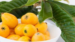 兵庫県でびわ狩り‼びわの食べ放題や収穫体験が楽しめる果樹園4選