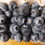 宮城県ブルーベリー狩り‼ブルーベリーの食べ放題や収穫体験が楽しめる果樹園10選