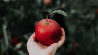 福島県でリンゴ狩りをするならココの農園がおすすめ!!